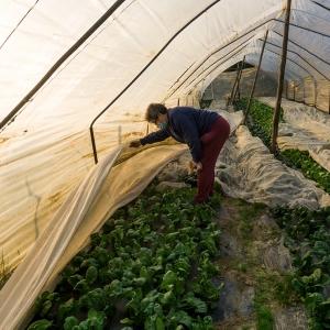Si leva la coperta agli spinaci